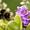 Видео уроки по пчеловодству #187750
