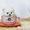 Шпиц белоснежный комочек снега #1089902
