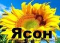 Продаємо  насіння гібриду соняшнику Ясон (106-108дн) , Объявление #1514603